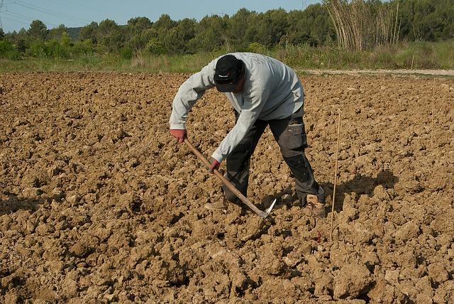 фермер, земля