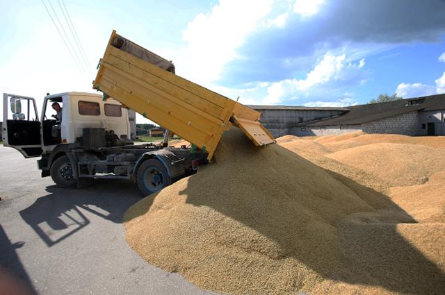 Фермеры решили не продавать пока зерно, надеясь, что позже, когда не останется импортного товара, оно подаражает