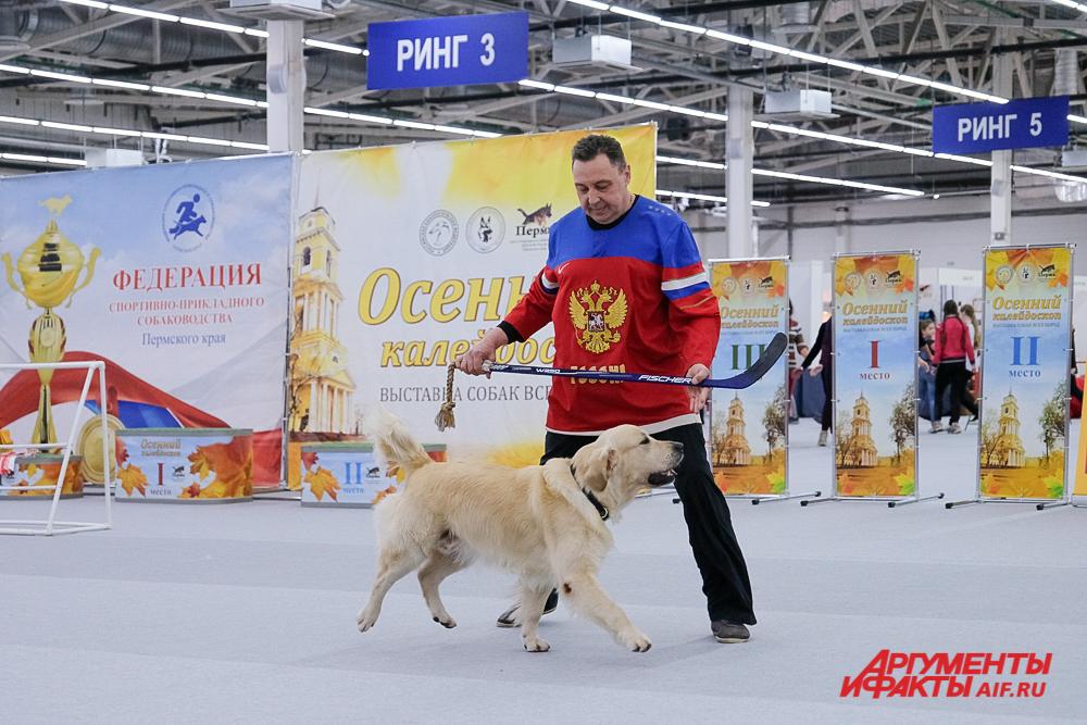Всероссийская выставка собак - 2018 в Перми