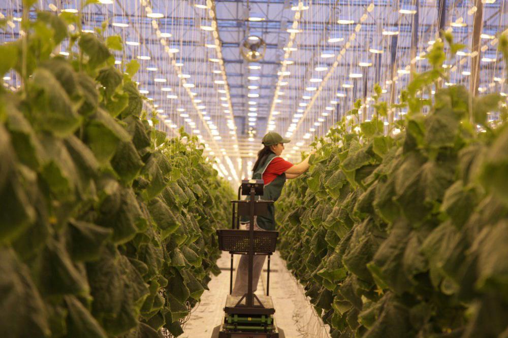 Агрокомплекс позволяет создать 720 новых рабочих мест.