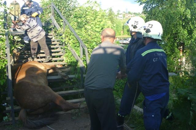 Хозяева не смогли помочь животному сами, поэтому вызвали спасателей