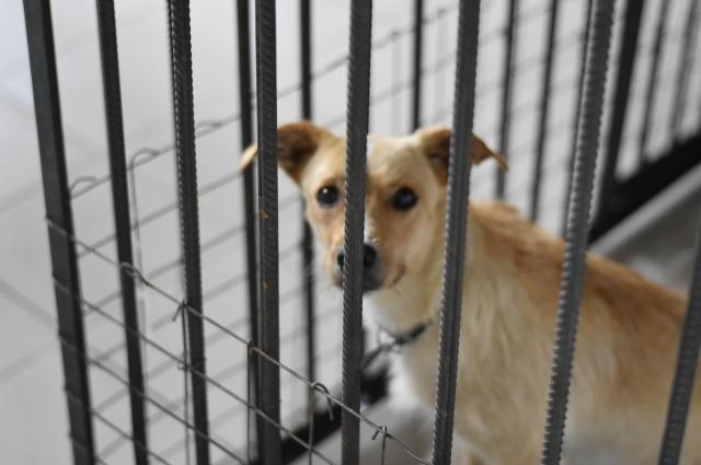 Больные животные живут в ветеринарном блоке.