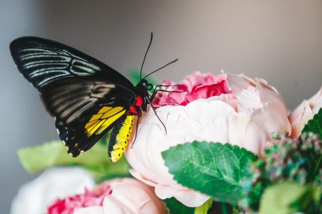 Бабочки приводят в восторг всех, кто приходит к Снежане в гости.