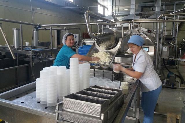 Сыр производится на новой технологической линии.
