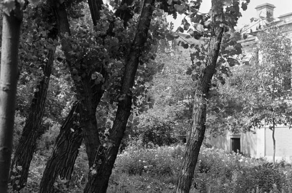 Уголок сада бывшего дома Юсуповых