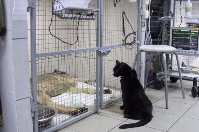 Кот Люцик и пациент ветклиники.