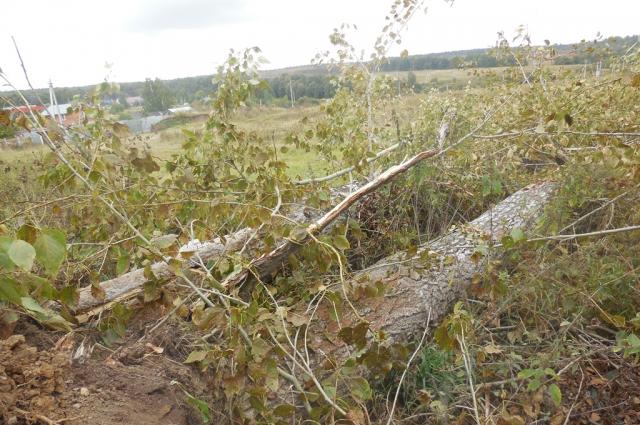 Деревья срубили незаконно.