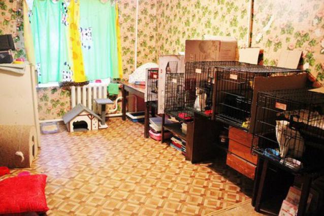 Комната, где живут здоровые кошки.
