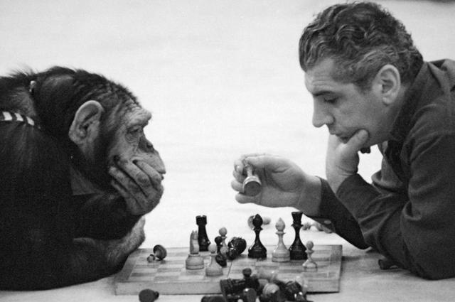 Обезьяна Рикки и ее дрессировщик Степан Исаакян играют в шахматы. 1965