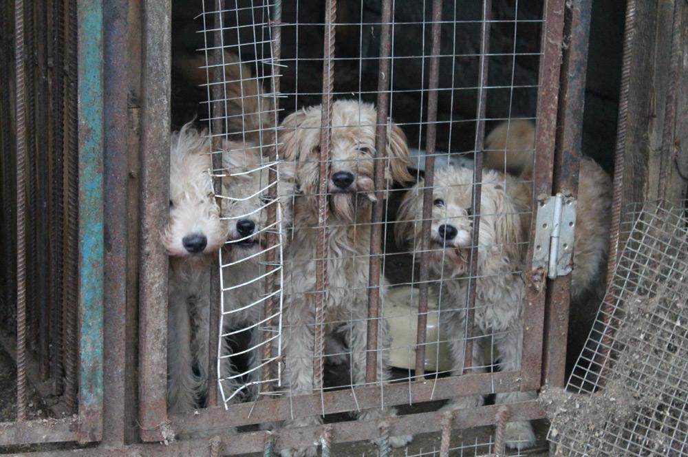 Суоярви может стать первым карельским райцентром, где проблема бродячих животных будет решена