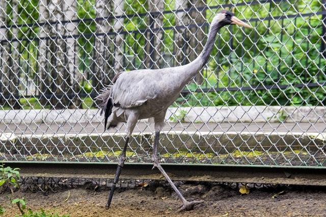 В дикой природе птицы с такими травмами не выживают.