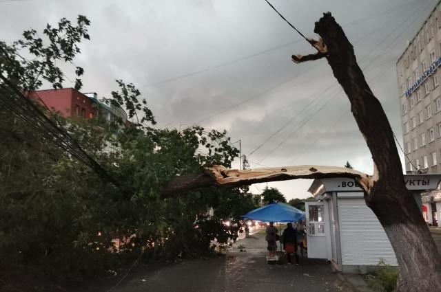 Сильный ветер ломал деревья...