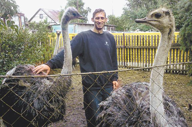 Дмитрий вырастил из птенчиков 80-килограммовых гигантов