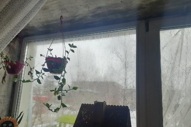 На окнах - влажные подтеки, на стенах мгновенно образуется плесень. Климатические условия в этом доме вредны для здоровья.