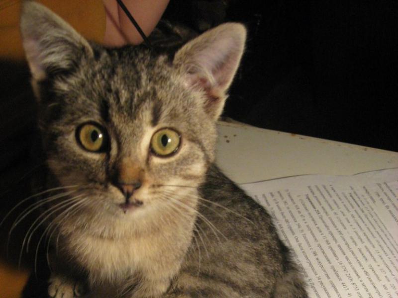 Ольга подобрала на улице котёнка с разбитой губой