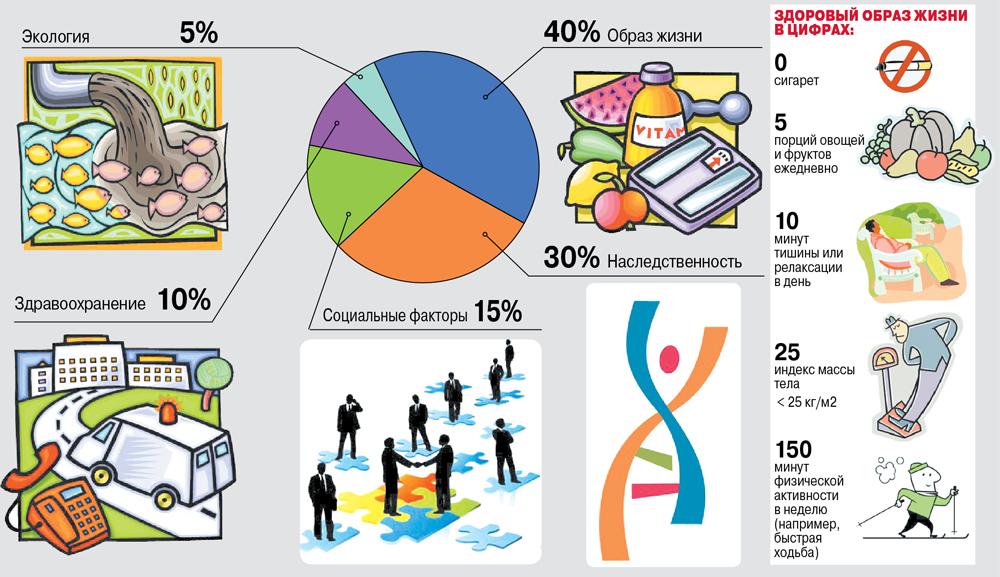Факторы, определяющие здоровье человека.