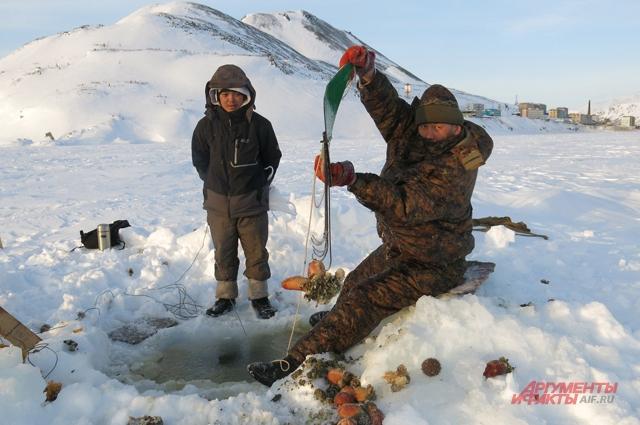 В эскимосском селе Новое Чаплино ловят упу, называемую в народе «морской картошкой», а по-научному – асцидией.