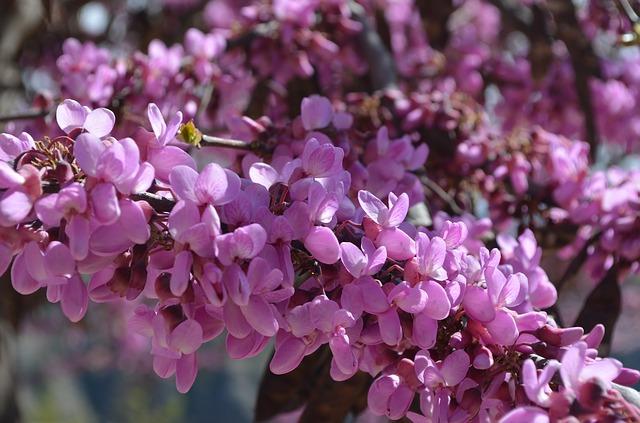 В Югре в конце мая и начале апреля - сезон опыления растений, от которого страдают аллергики