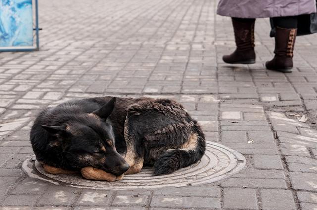 Защитить животных по закону не могут уже много лет.