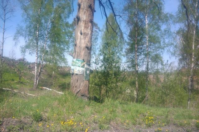 Деревья не должны исчезнуть.