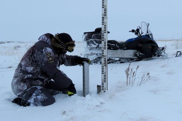 Будни инспектора заповедника - исследуется глубина и плотность снежного покрова.