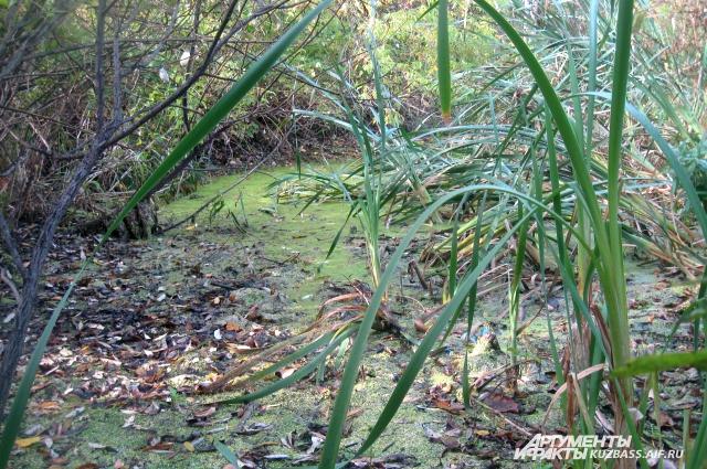 Это не дикие джунги, а болото рядом с домом.