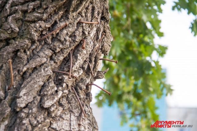 Из ствола дерева торчат гвозди.