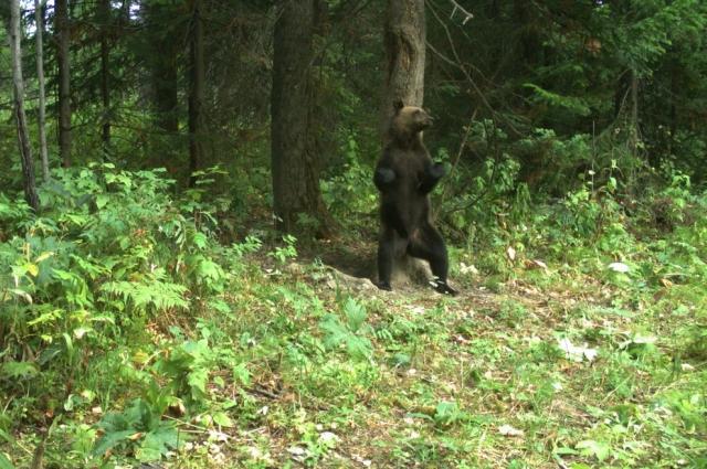 В августе-сентябре сотрудники застрелили 14 медведей.