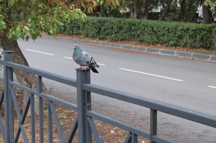 На обновлённой улице удобно и водителям, и пешеходам, и даже птицам.