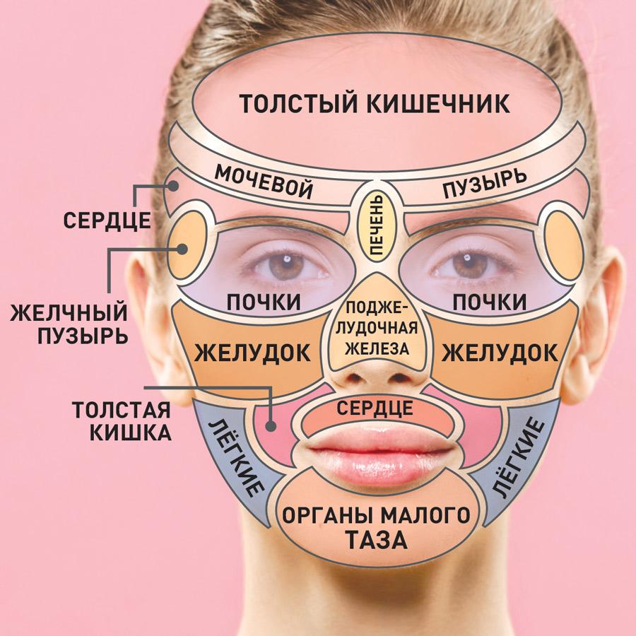 Зоны лица отвечают за состояние определенных органов.