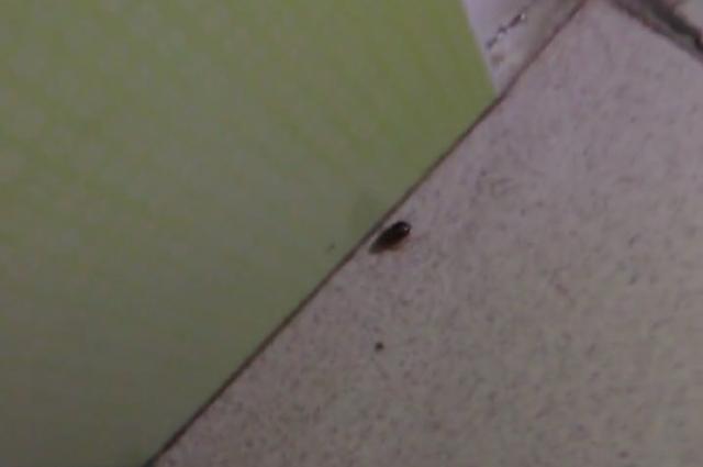 Пациенты детской больницы Перми пожаловались на тараканов и клопов