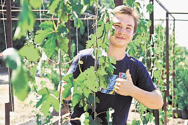 14-летний Савелий насвоём участке выращивает виноград иежевику.