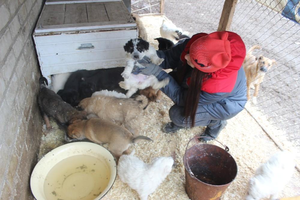 Собаки в городской службе по контролю за безнадзорными животными