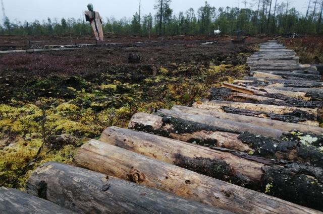 Территория плантации – бывший сгоревший лес