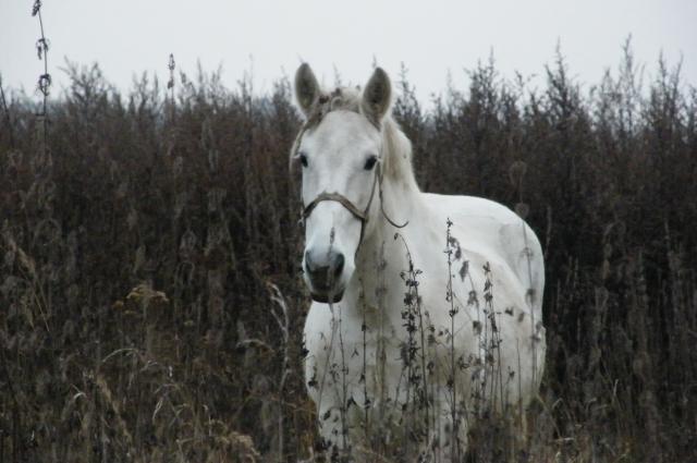 По ночам жители той деревне на улице или около кладбища часто видели белую лошадь, скачущую куда-то в темноту.