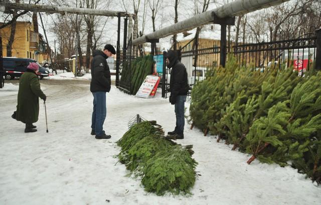Разброс цен на елочных базарах Пензы - от 150 до 700 рублей.