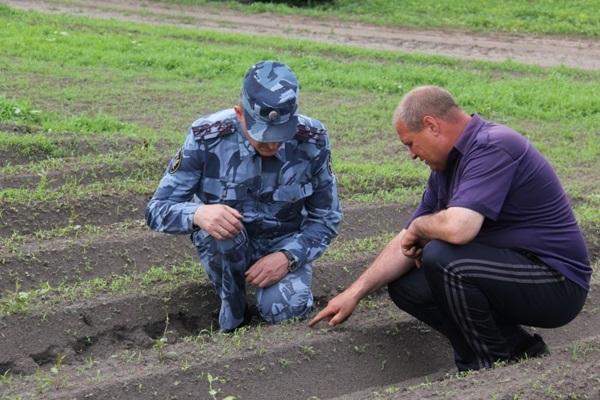 В пензенских колониях-поселениях успешно выращивают овощи.