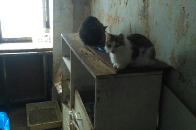 Пенсионерка приютила животных, но заботиться о них не могла