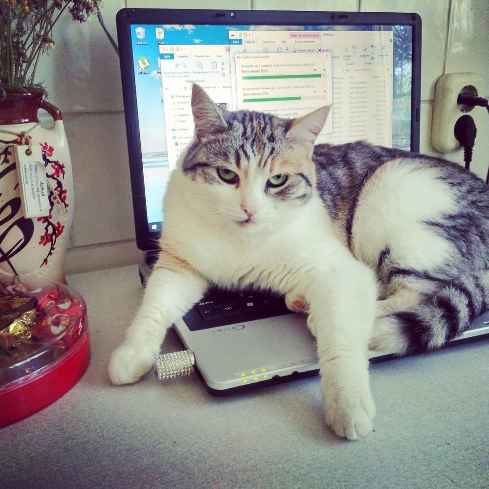 Кошка Тася