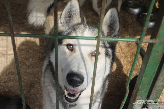 В питомниках все собаки привиты и стерилизованы. Сейчас их - более 550. Любую из них можно забрать.