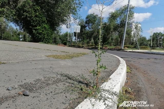Живучие сорняки завоёвывают Оренбург.