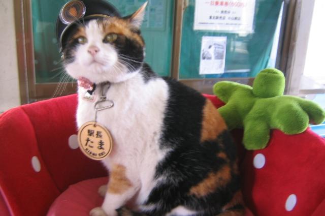 Кошка Тама.