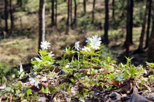 У природы своя поэзия, только вместо рифм - цветы.