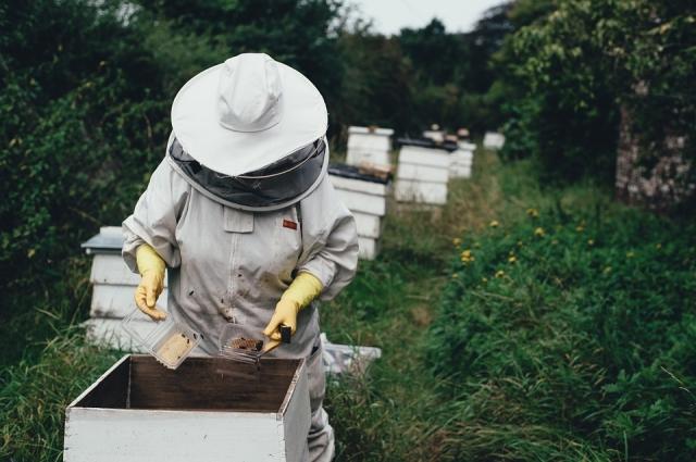 Пчёлы могут гибнуть от недостатков в работе пчеловодов, которые при борьбе с болезнями насекомых могут сами серьёзно навредить им.