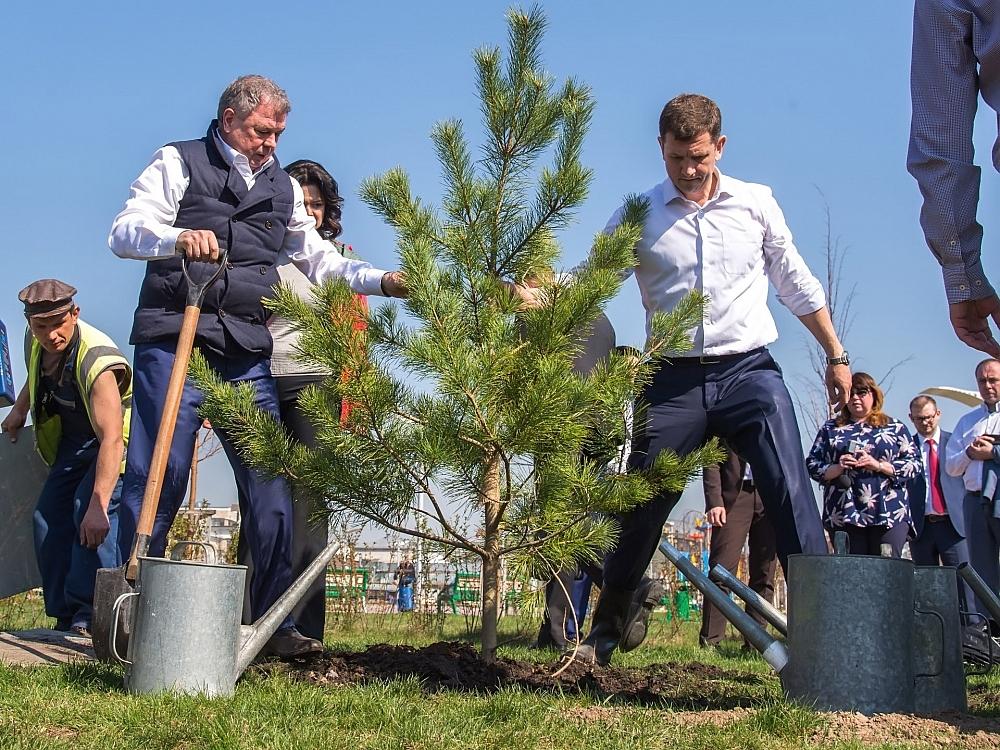 Деревья в парке Калуги посадили губернатор области, городской голова Калуги и министр экологии региона.