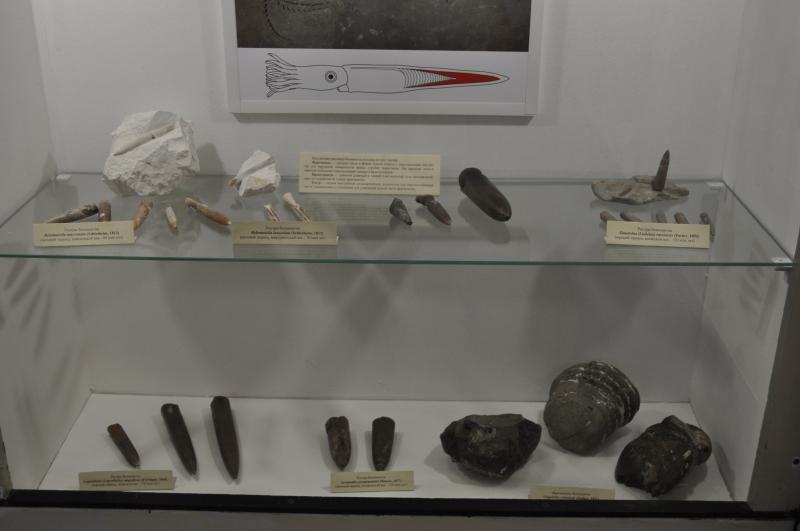 Ископаемые остатки древних головоногих моллюсков белемнитов.