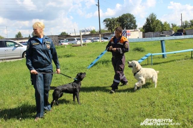 Кинологи со служебными собаками на занятиях.