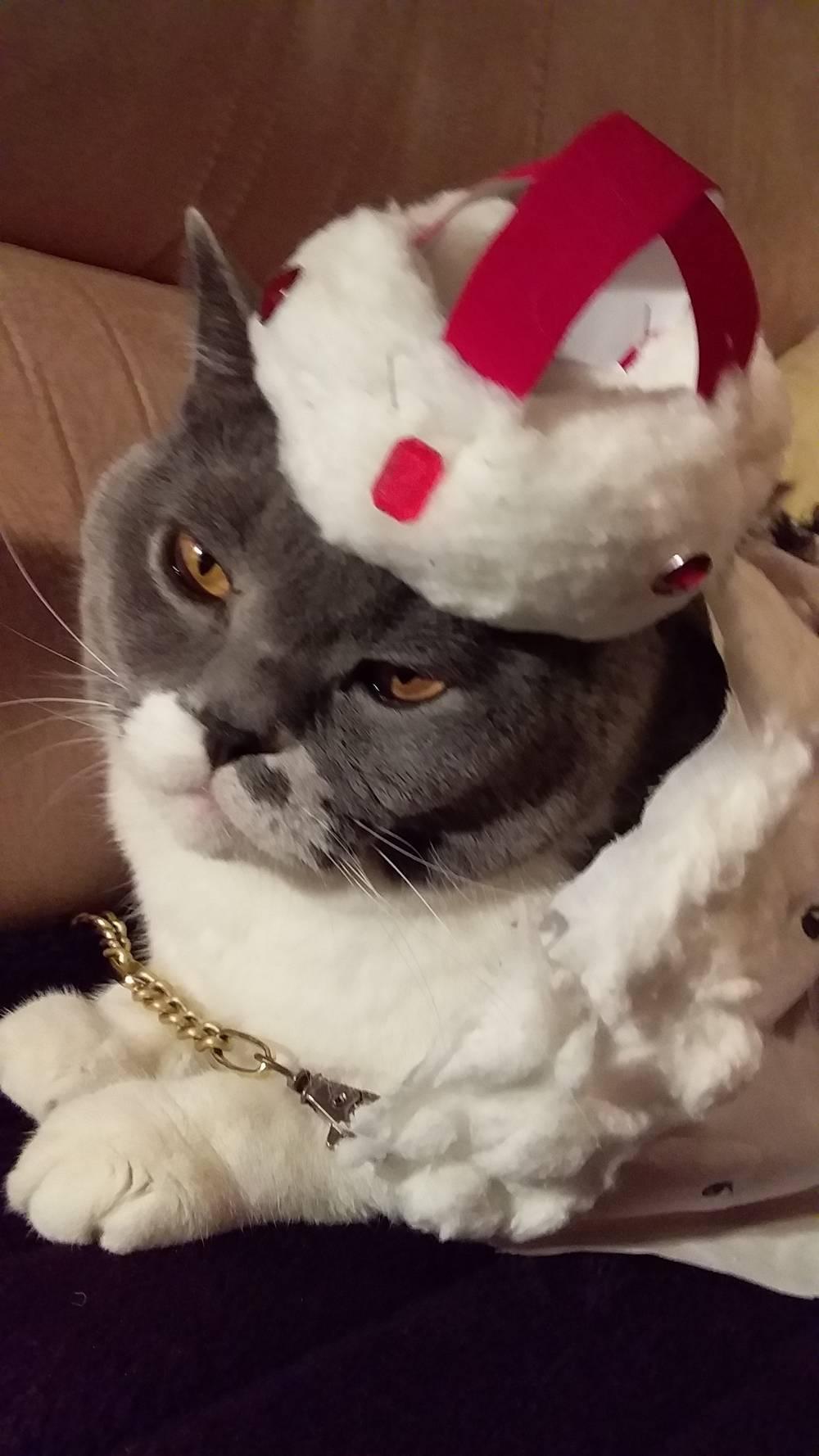 Кот Сильвер