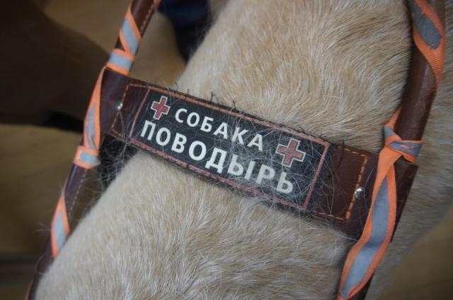 Специальная шлейка напоминает прохожим о правах собаки-поводыря.