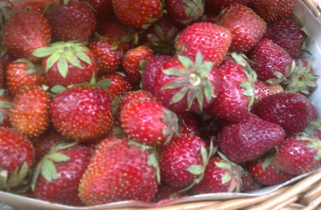 В Пензенской области успешно выращивают клубнику.